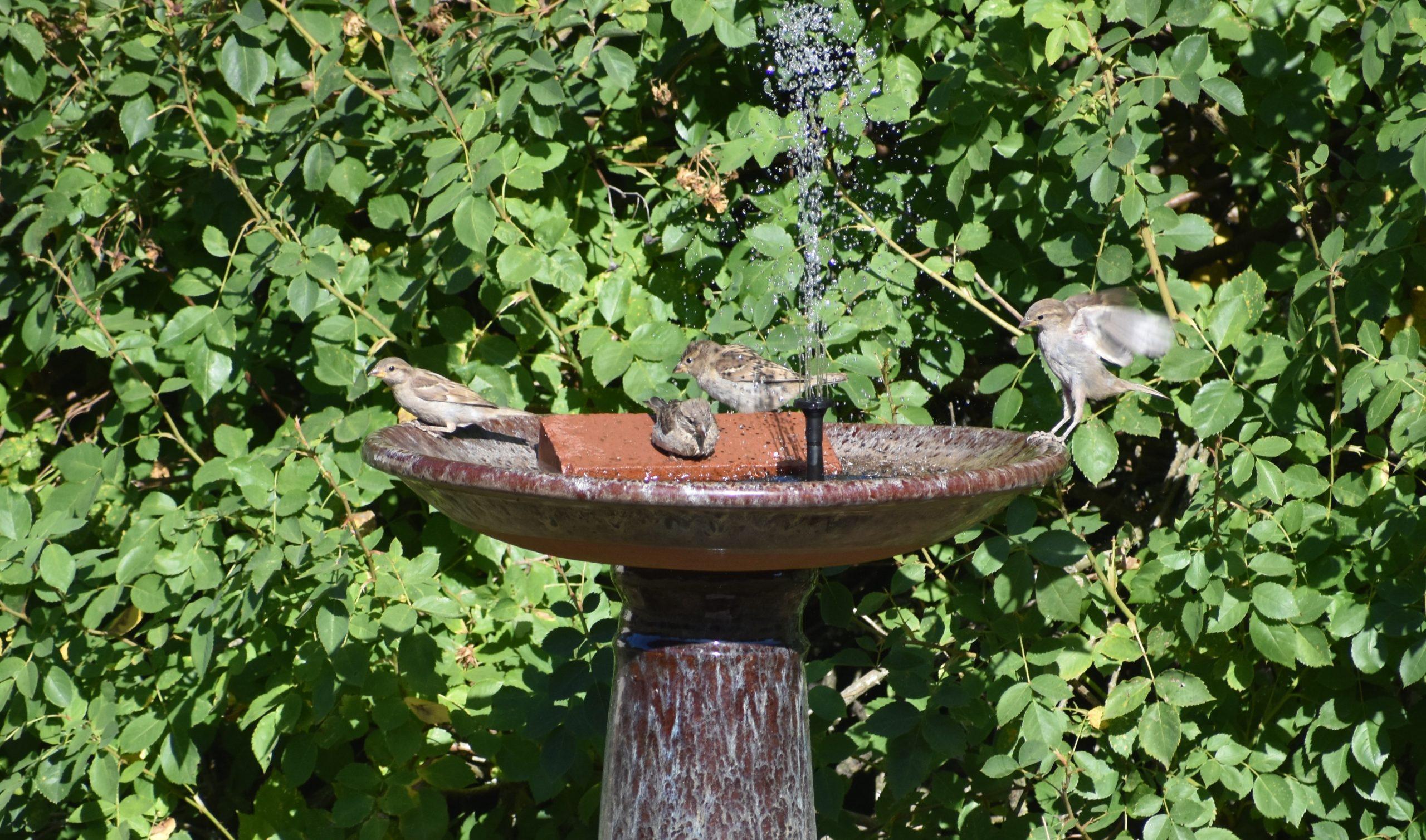 Help wildlife during heatwaves - birdbath